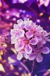 Flourishing in Vibrance