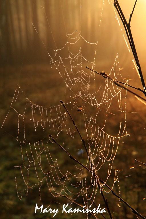 Shining Spiderweb by lazureblood