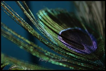Peacock feather by lazureblood