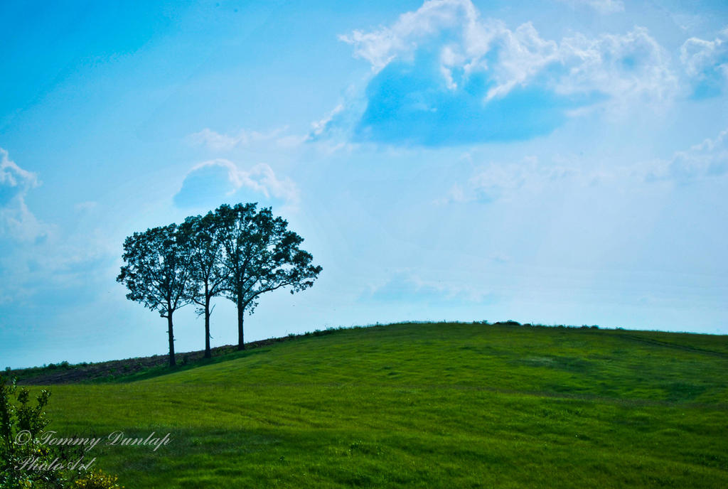 three tree one by Tommy8250