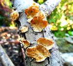 Branch Fungus