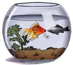Frowny fish and paisley fish