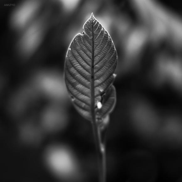 Last life. by Amizyolaroid