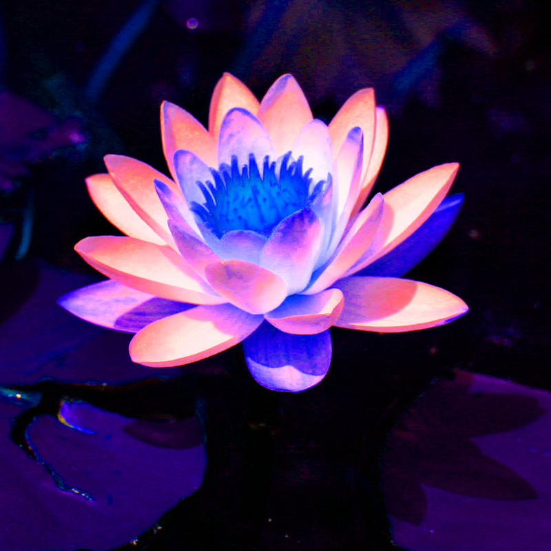 magic flower by vapeur on DeviantArt