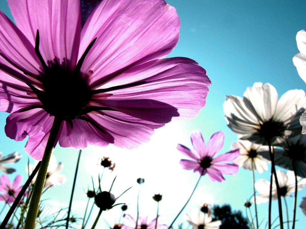 flowers... by vapeur