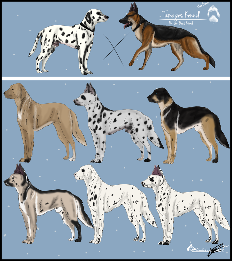 deviantART More Like Pointer Puppy Adoptables by stormsmistbriards