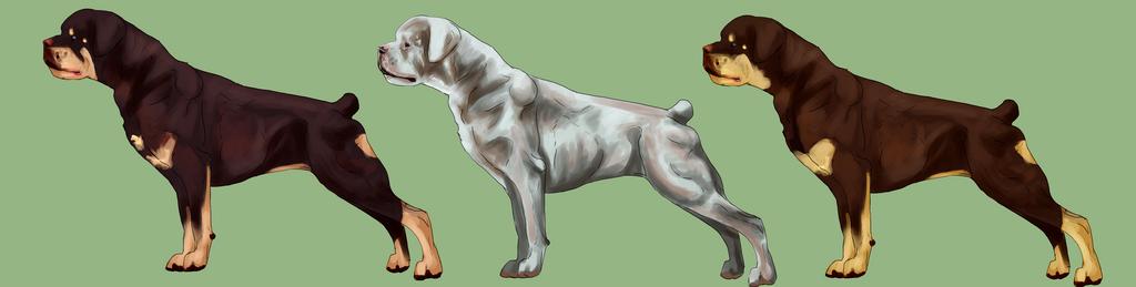 Rottweiler coat colors