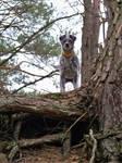 Lesny Szczur
