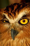 Wink of An Owl