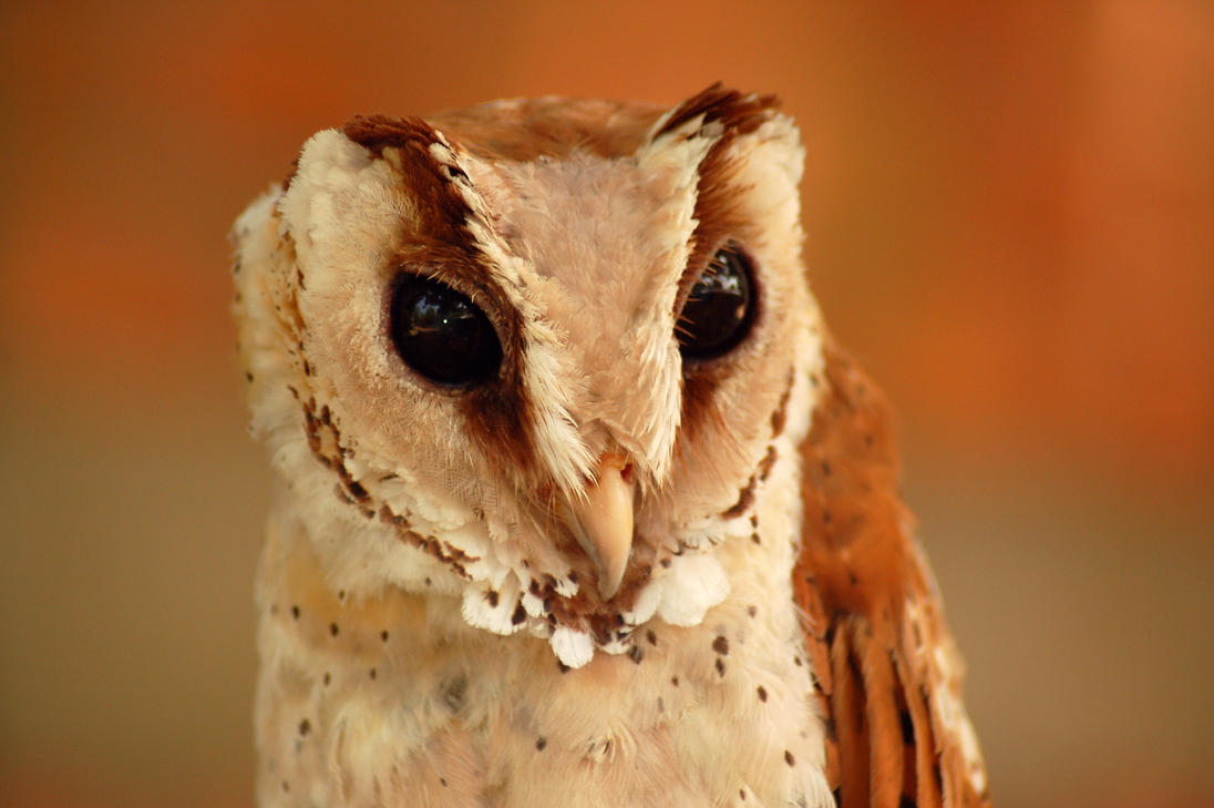owl__ugly_or_pretty__by_esee-d10ln6e.jpg