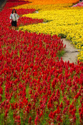Flower Festival at Taiwan by esee