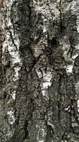 Bark on tree