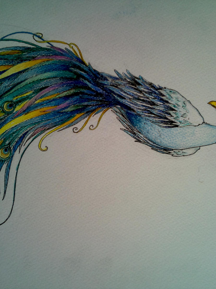 Peacock feather drawing tattoo - photo#42