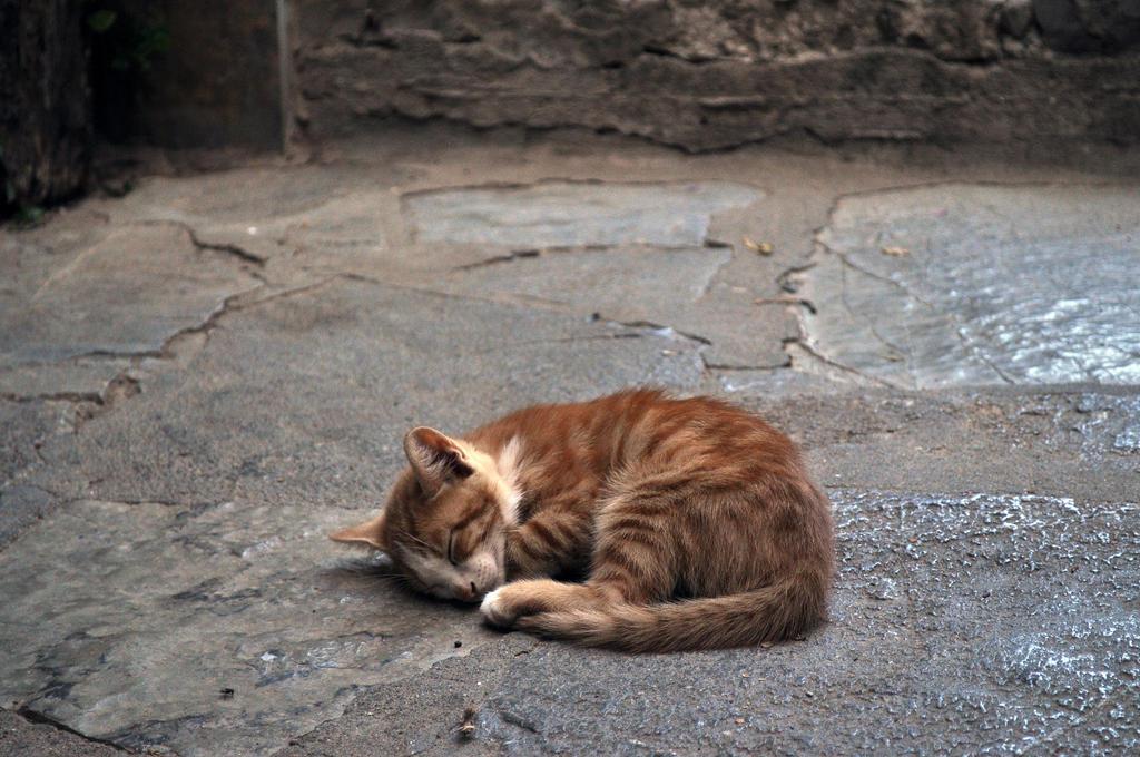 sleepy by Mynyny
