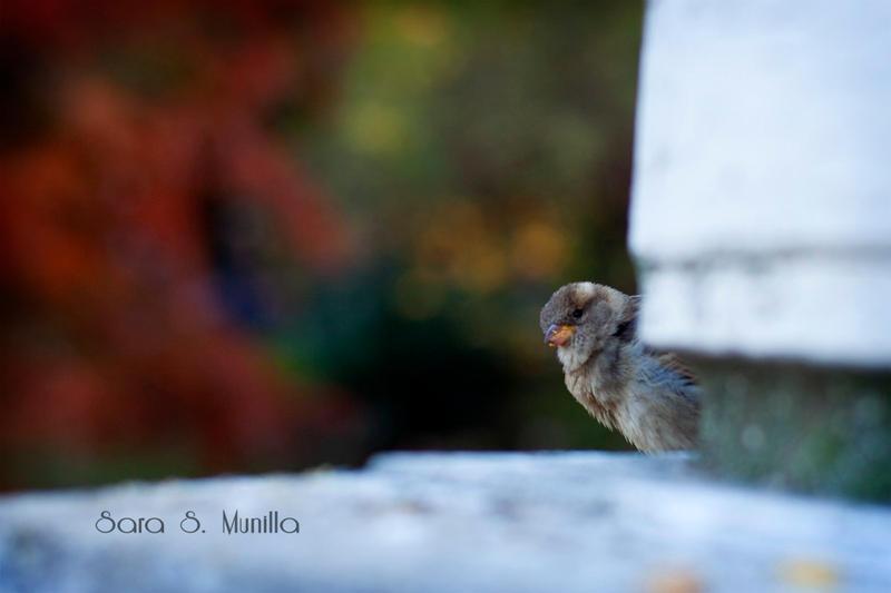 Peek-a-boo by SarasMunilla