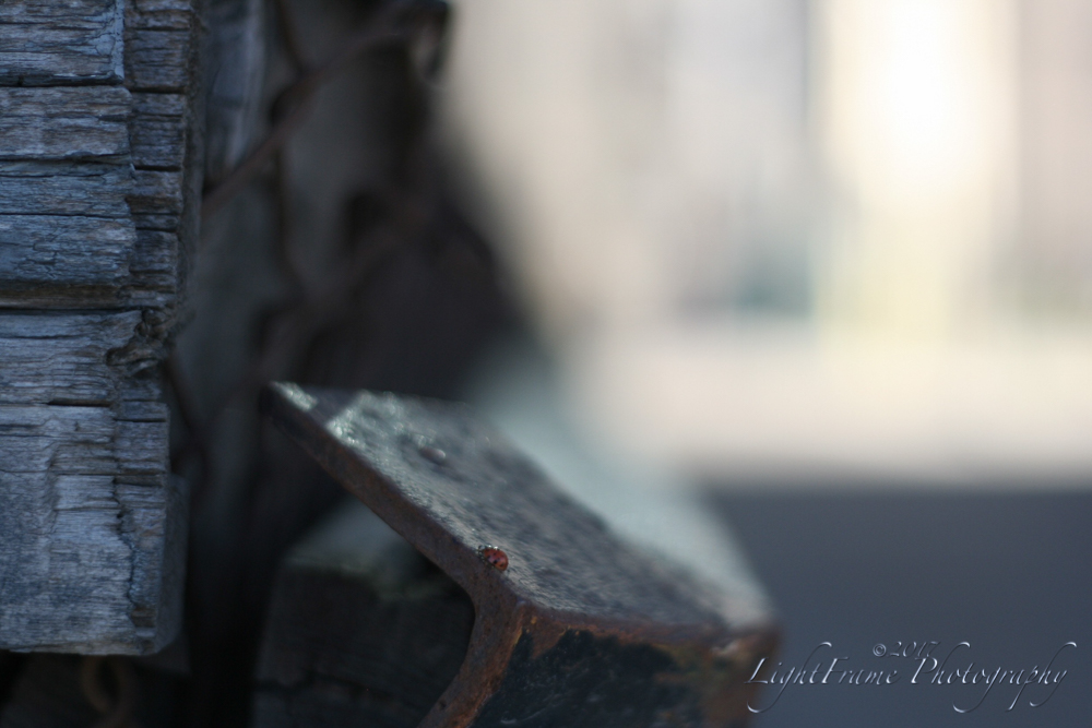 Iron Ladybug by lilpixie