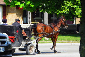 Rubber Wheel Mennonite Buggy by laurelrusswurm