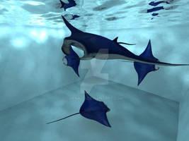 Aquarium - Manta