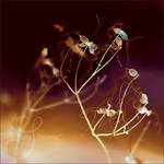 butterflies from mars by prismes