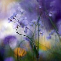 spring's jungle