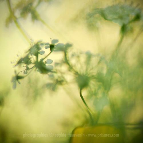 tender sun by prismes