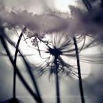3 mm of beauty