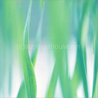 blue grass II by prismes