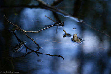 spying the little frog by prismes