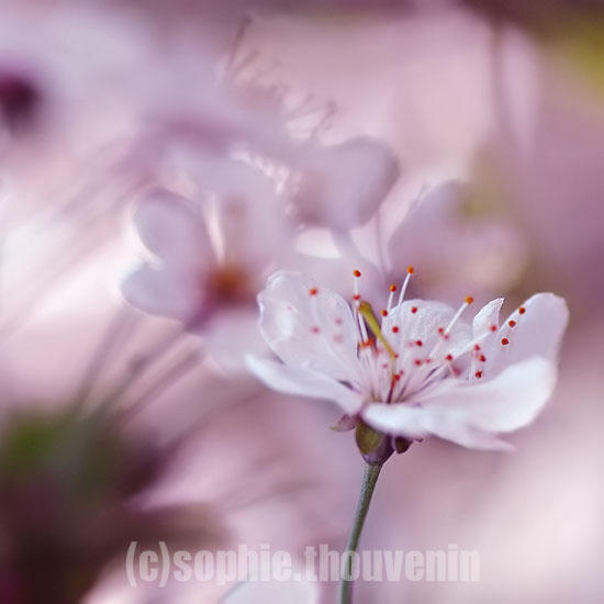 naive spring III by prismes
