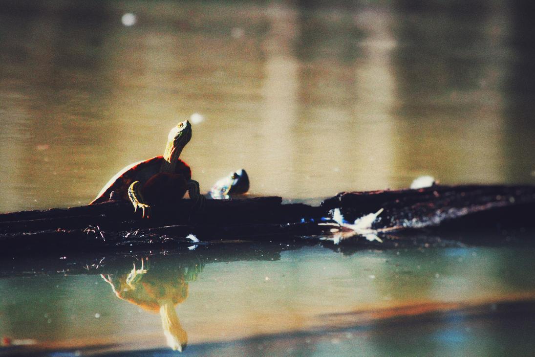 Turtles On Break by Naruthirion