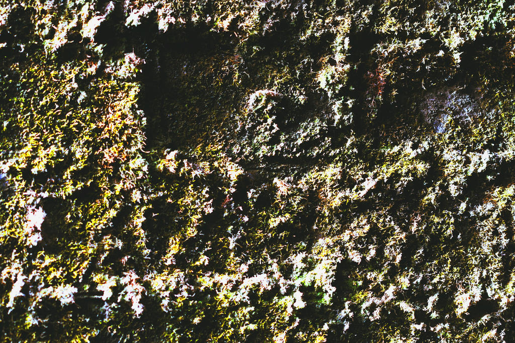 Moss On The Wall by Naruthirion