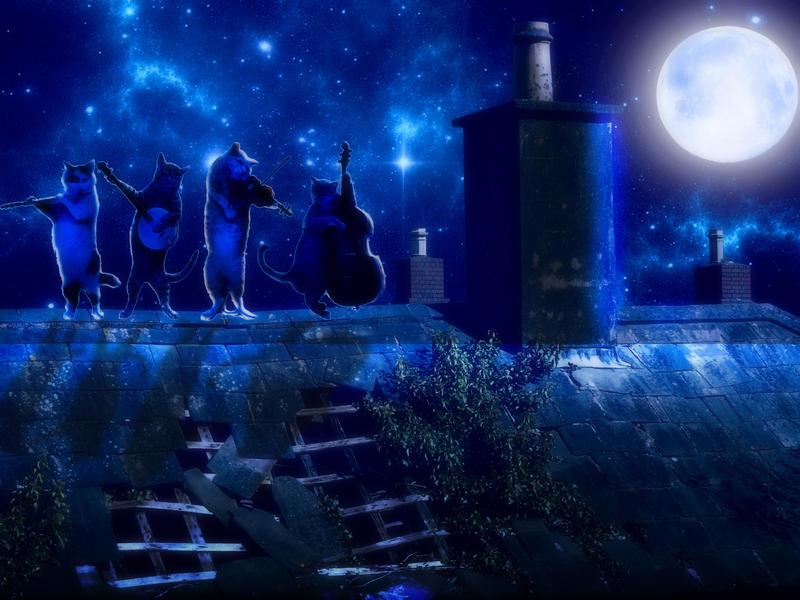 Cat's Band by Hatleya