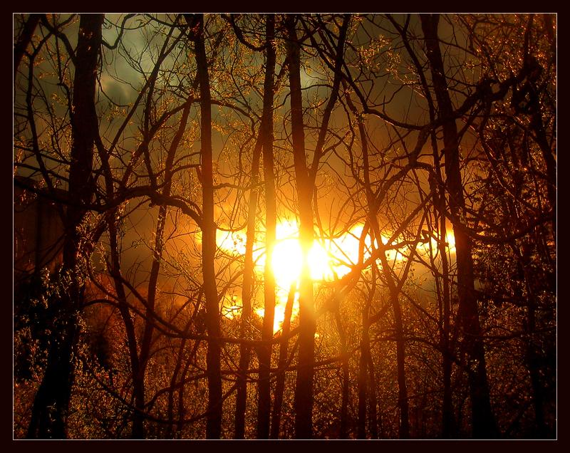 Diário dos Sonhos Lúcidos de Emerson Pawoski - Página 4 Angel_Of_The_Forest_by_Mrichston