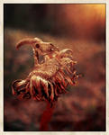 Dandelian Death