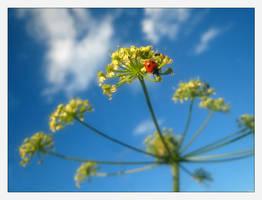My Fair Ladybug by Mrichston