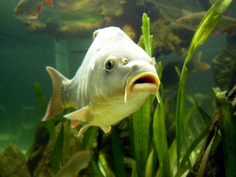 Stock Photo: fish