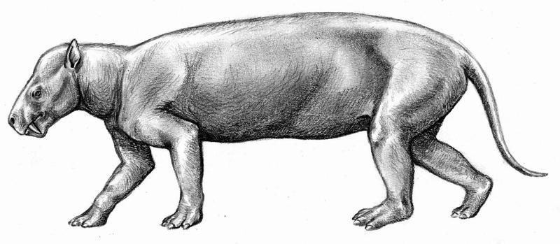 http://fc03.deviantart.net/fs47/i/2009/215/d/4/Prodinoceras_by_Biarmosuchus.jpg