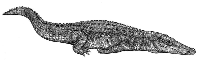 Mesozoic crocodile