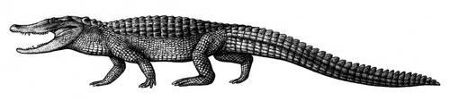 Brachychampsa by Biarmosuchus