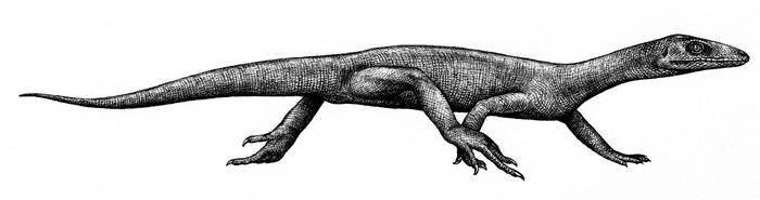 Prolacerta broomi by Biarmosuchus