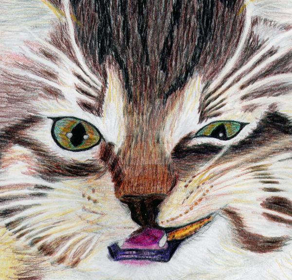Little Tiger by ami-hikaru