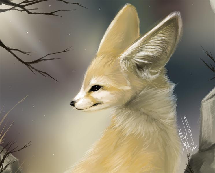 Daily animal 4 fennec by danjiisthmus on deviantart - Pagina da colorare fennec fox ...