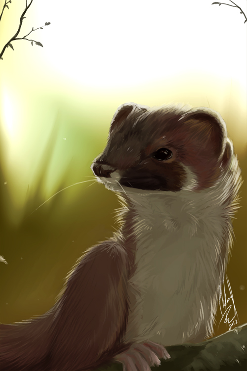 Daily Animal 10 - Stoat by DanjiIsthmus