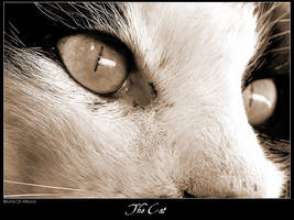 The Cat by metallo