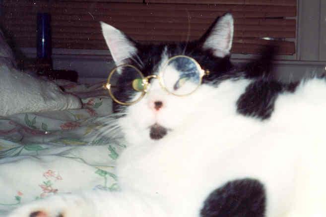 Studious Cat by InkHeart17 on deviantART