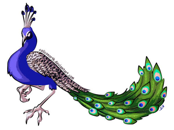 Peacock by CalicoNorth