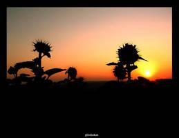 Sunflower silhouettes by dorukkirezci