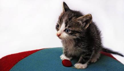 Kitty by dorukkirezci
