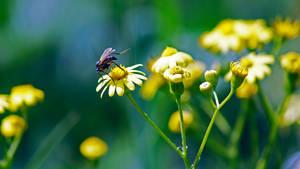 Pollination by dorukkirezci