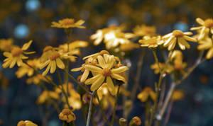 Yellower by dorukkirezci